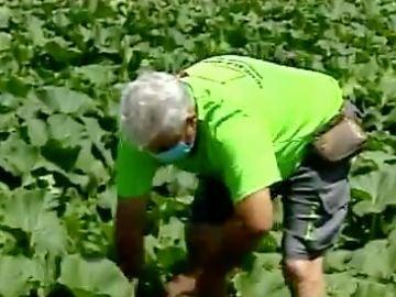 Agricultor valenciano