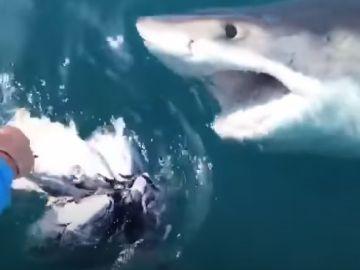 Un pescador mure por el ataque de un tiburón