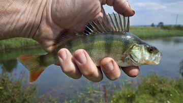 Operan a un hombre en China para extraerle un pez