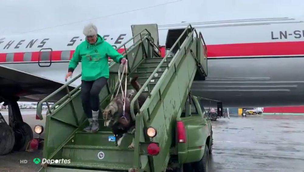 El increíble viaje de vuelta a Noruega de Thomas Waerner y sus 28 perros de trineo en un avión histórico