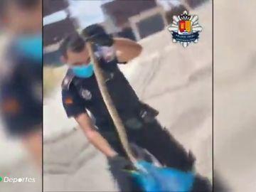 Temor entre ciclistas y runners por la aparición de serpientes en Arroyomolinos