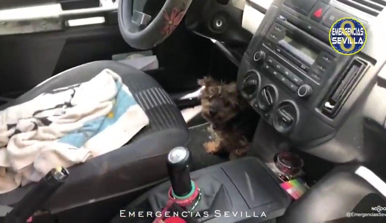 Rescatan a un perro encerrado en un coche que se encontraba a 40ºC al sol en Sevilla