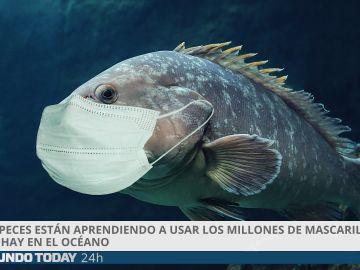 Los peces usan mascarilla