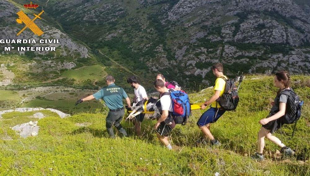 La Guardia Civil rescata a Gretel, una perra herido en el pico Espigüete en Palencia