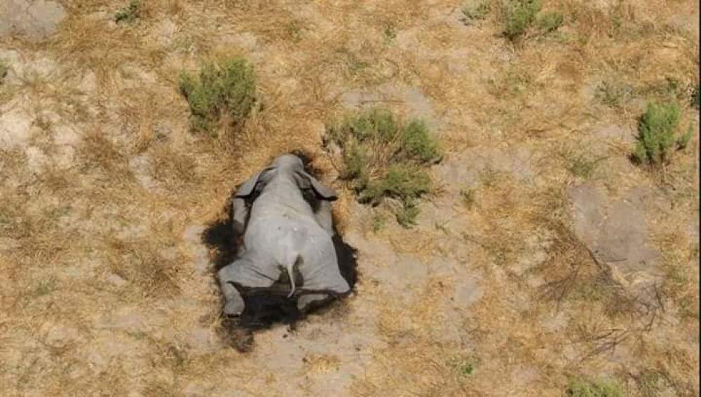 Elefantes muertos en Botsuana