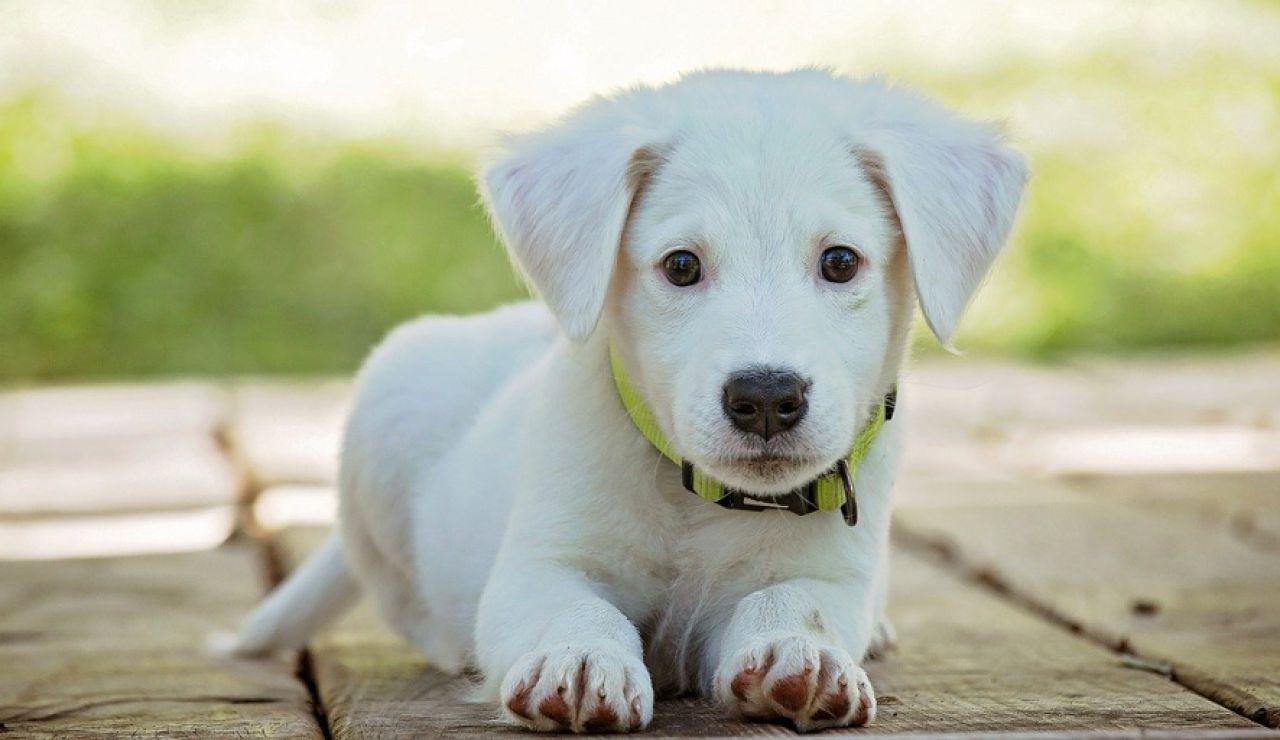 Calcula la edad de tu perro. Fórmula