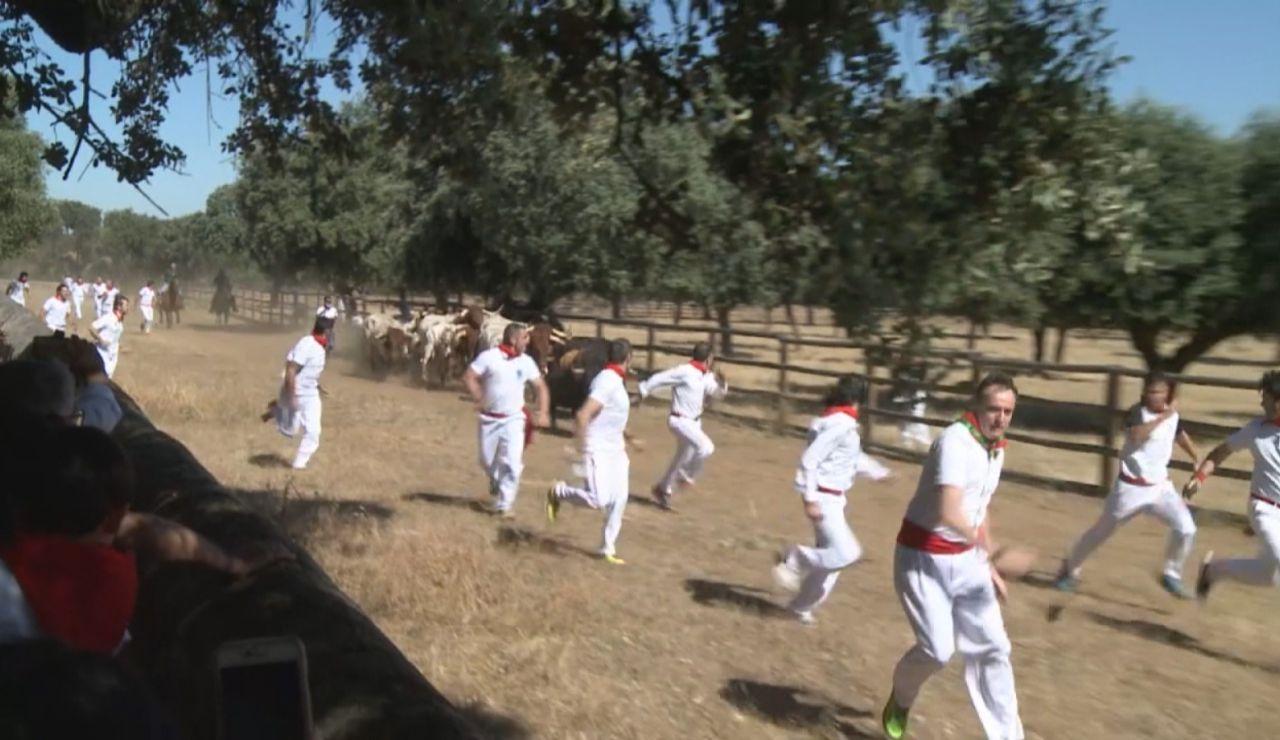Un ganadero salamantino recrea un encierro de San Fermín tras la suspensión de las fiestas