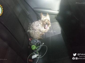 Denunciado por dejar a su perro dentro del coche con 40º en el exterior en Sevilla