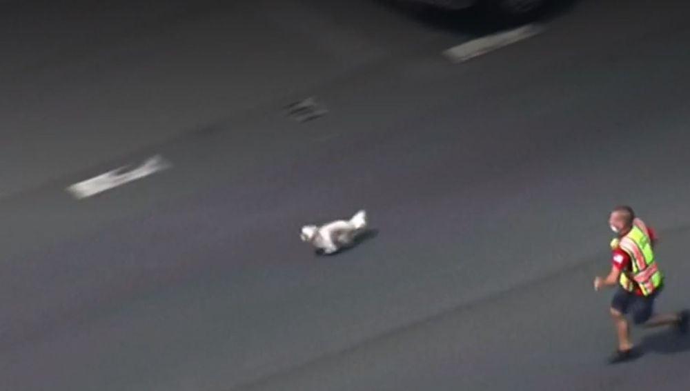 Persiguen a un perro por una carretera de Maryland (EEUU) para capturarlo y ponerlo a salvo