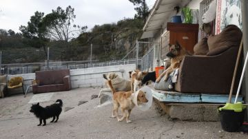 Albergue municipal de perros y gatos