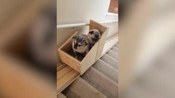 Perros en la escalera mecánica
