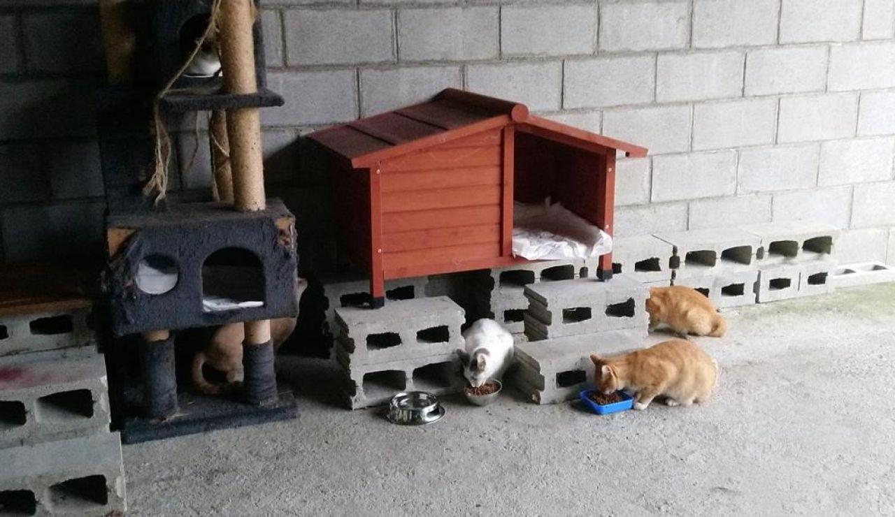 Una vecina de A Coruña convierte su garaje en refugio de gatos