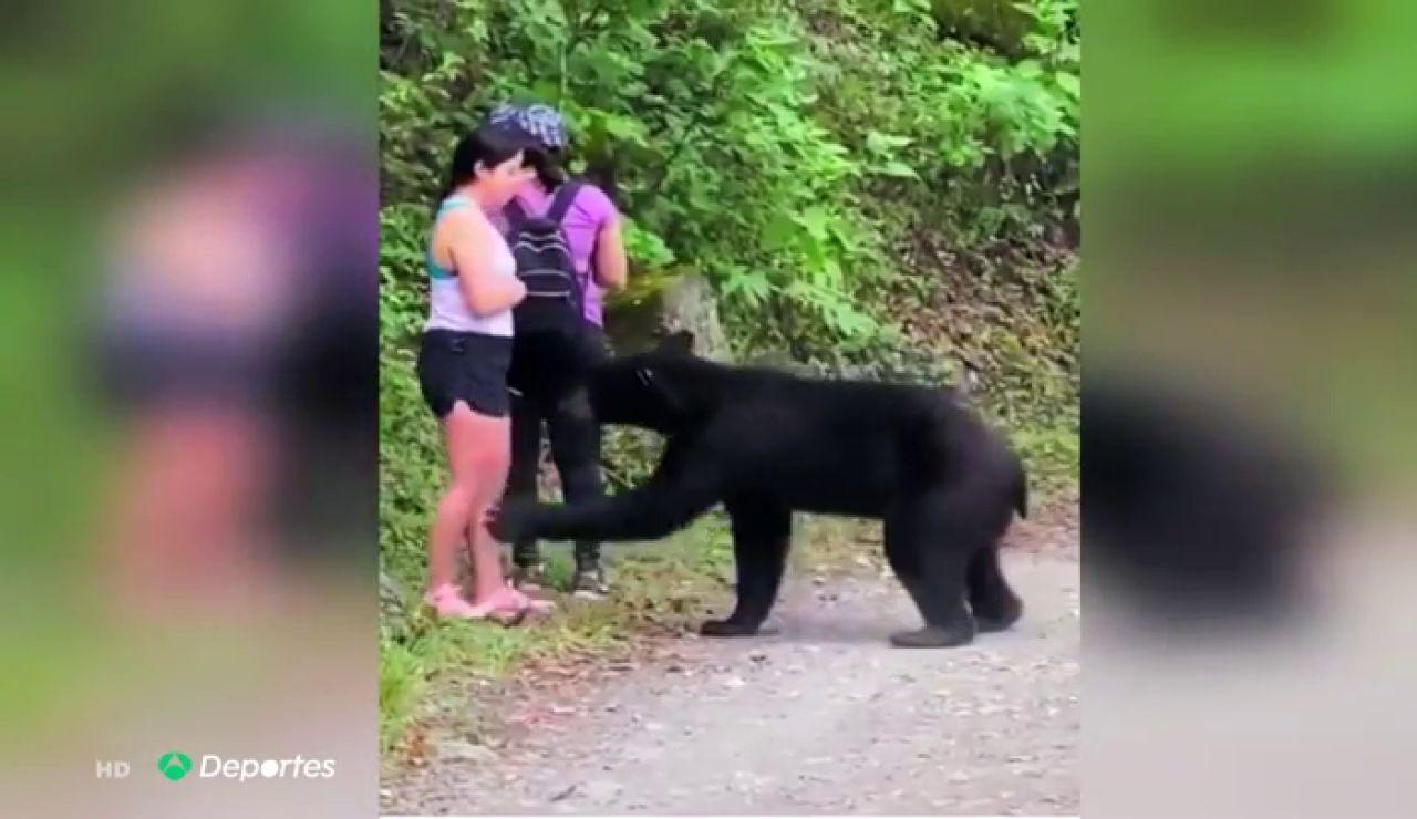 Un oso se acerca peligrosamente a una mujer en México pero, en vez de huir, se saca un 'selfie' con el animal