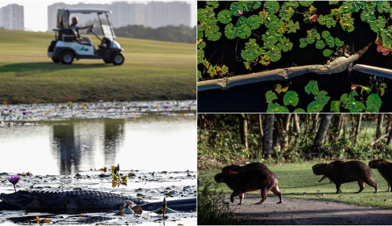 Animales en el campo Olímpico de Golf de Río de Janeiro
