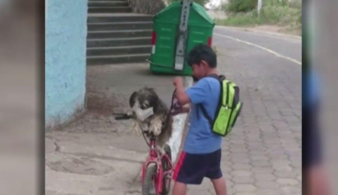 Se vuelven virales las imágenes de un niño poniéndole la mascarilla a su perro en Ecuador