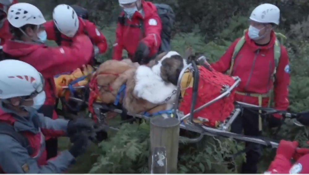 Rescatan a un perro de la montaña más alta de Inglaterra