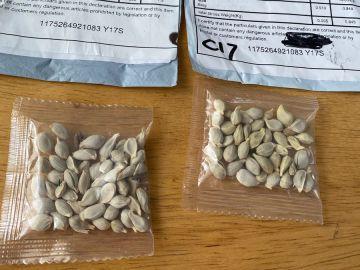 Muchos hogares de EEUU reciben un misterioso paquete con semillas que procederían de China