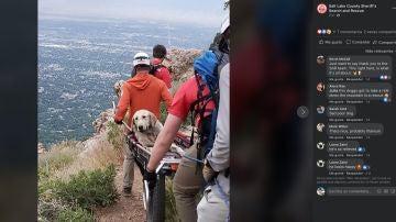 Rescatan a un perro de la montaña