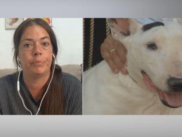 """Un perro 'bull terrier' se escapa y muerde a una niña de tres años, """"mi hija no puede caminar"""""""