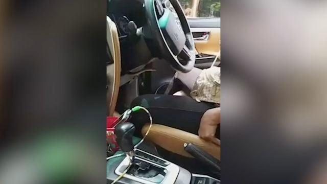 Serpiente en el coche