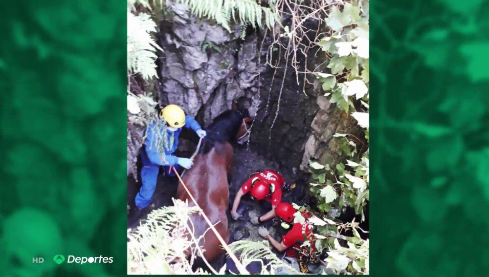 """El rescate al límite en helicóptero de un caballo que cayó a un agujero en Asturias: """"Pasó dos días en el pozo"""""""