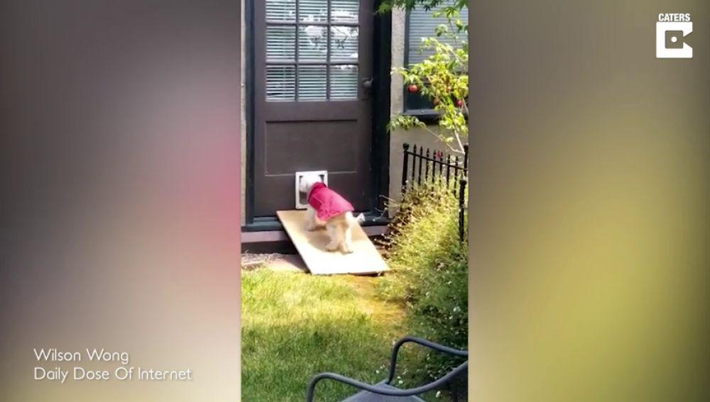 VÍDEO: Un adorable perro anciano lucha para subir la rampa que le permite entrar a su casa