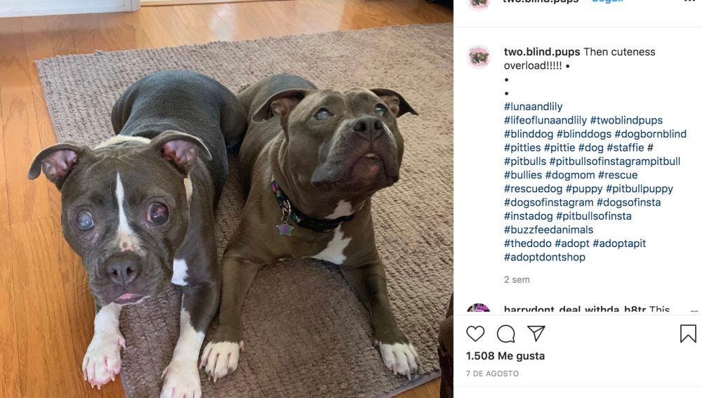 Instagram de @two.blind.pups
