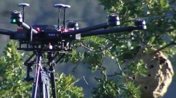 Dron con balas de hielo contra las avispas velutinas
