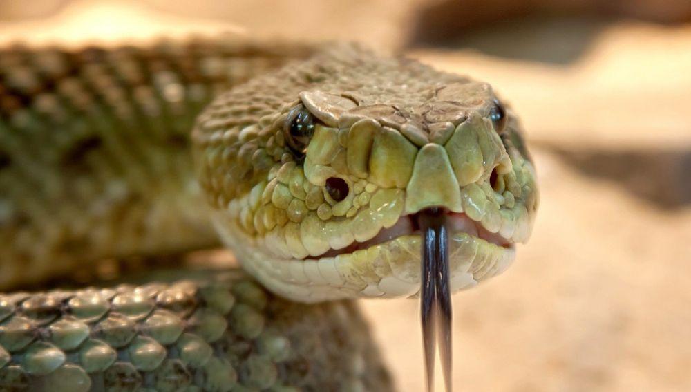 Imagen de archivo de una serpiente