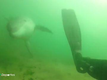 """El 'navalleiro' Roger explica su increíble amistad con el delfín Manoliño: """"Lo acariciaba, casi lo abrazaba con las aletas"""""""
