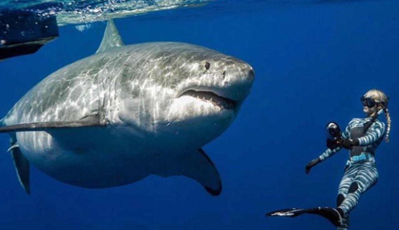 """El alegato de One Ocean Diving sobre el gran tiburón blanco: """"Son grandes, pero no son malos"""""""