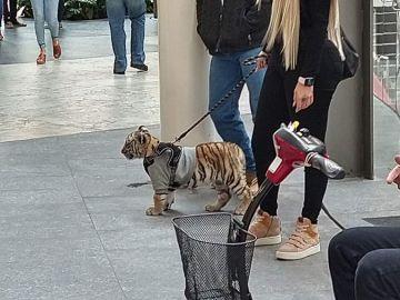 La mujer paseando el tigre