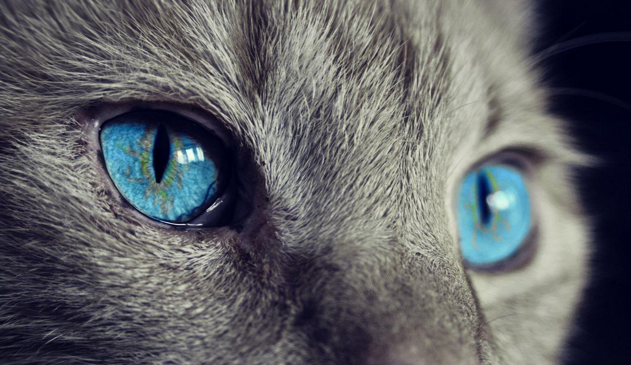Muere un gato influencer tras presenciar el ataque a su dueña en un parque de Nueva York