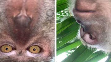 Mono haciéndose selfies