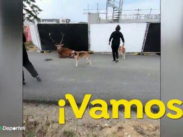 La terrible escena de un ciervo agonizando ante varios perros de caza desata una pelea entre cazadores y animalistas en Francia