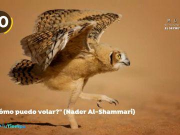 Estas son las fotografías más divertidas del mundo animal