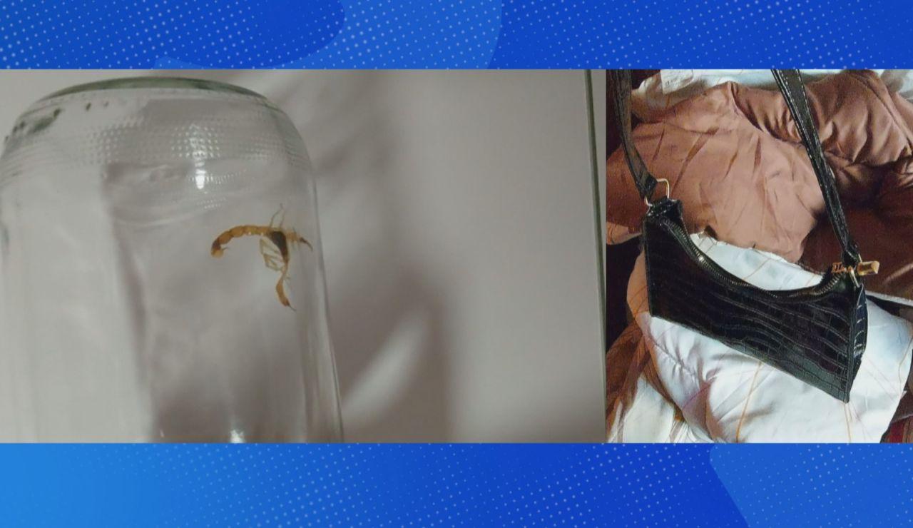 Le pica un escorpión.