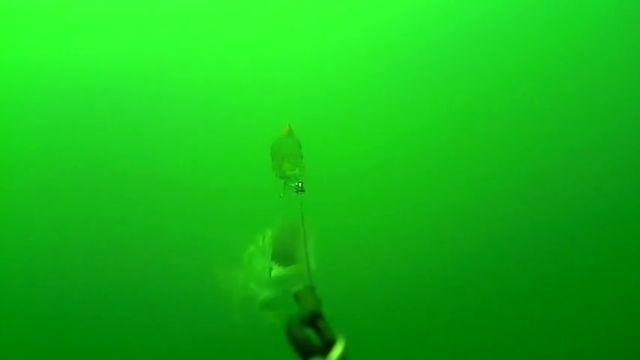 Un pez gigantesco emerge de las profundidades para devorar el cebo de un barco pesquero