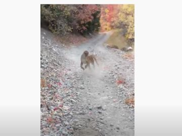 Secuencia del puma persiguiendo a un runner en Utah
