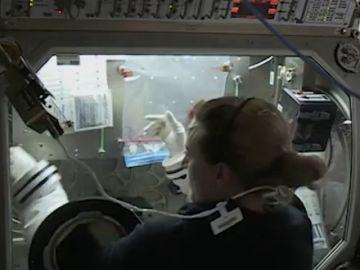 La NASA busca mineros espaciales