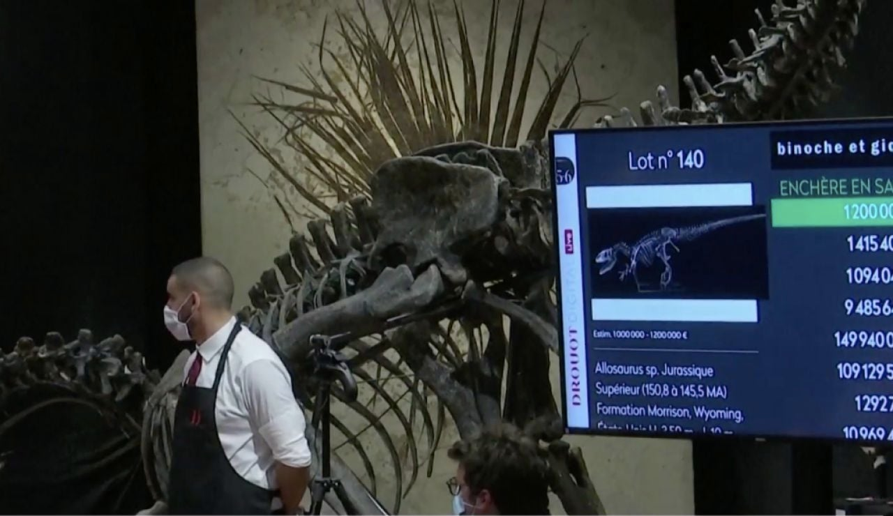 Esqueleto del dinusaurio