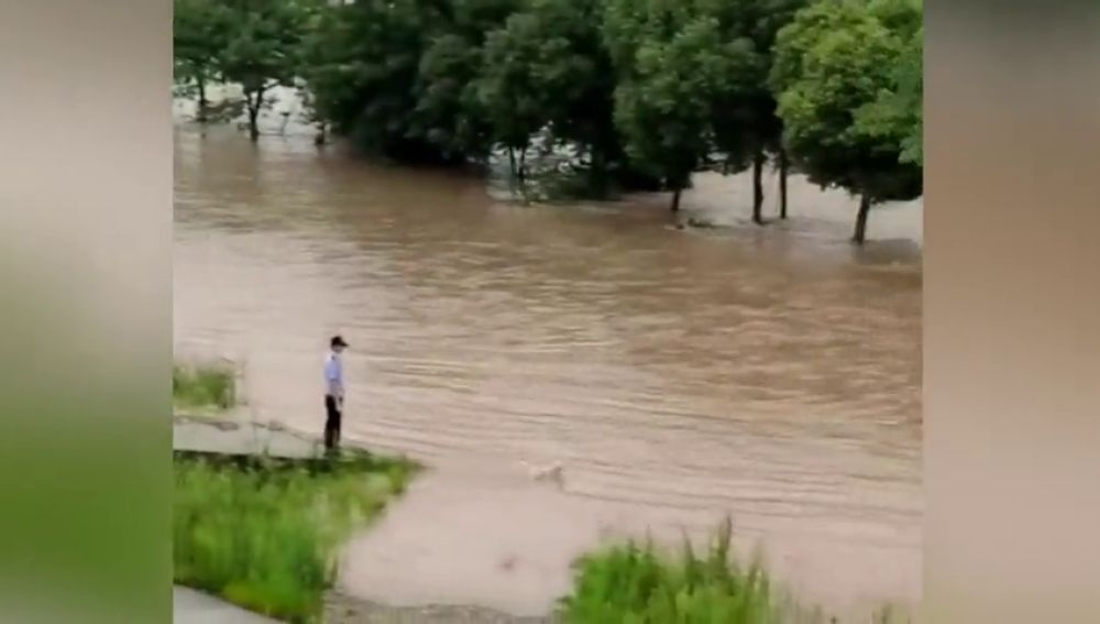VÍDEO: Una perra se tirá al agua en medio de una riada en China para salvar a su cachorro