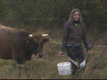Una mujer alimentando al ganado