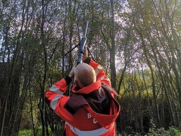 Rifles y cápsulas de veneno para acabar con la avispa velutina