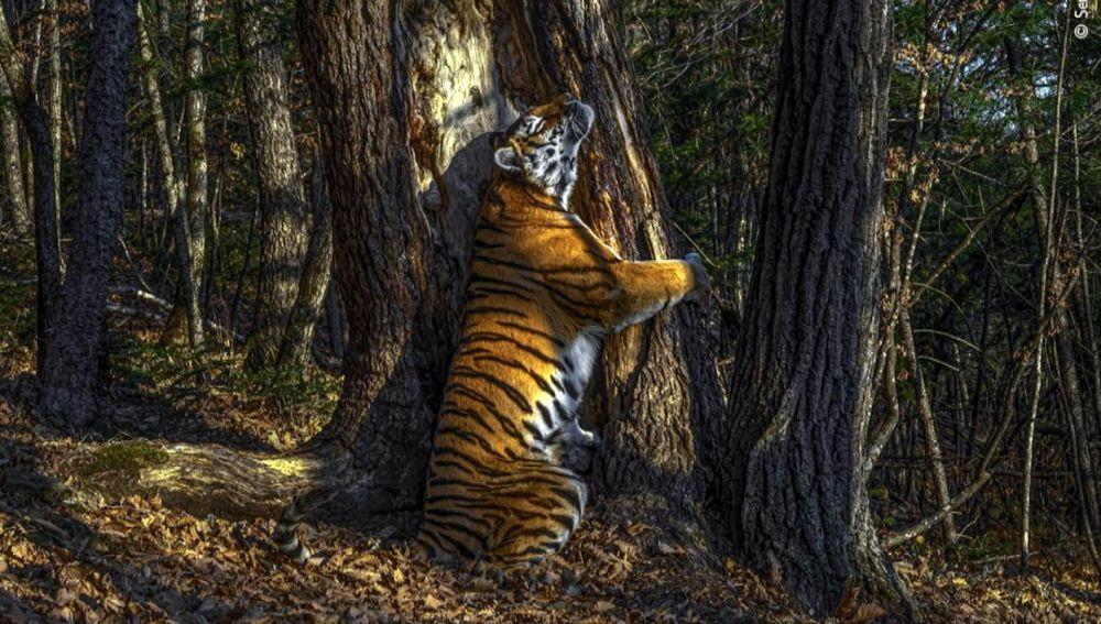 Fotografía ganadora del Wildlife Photografy 2020