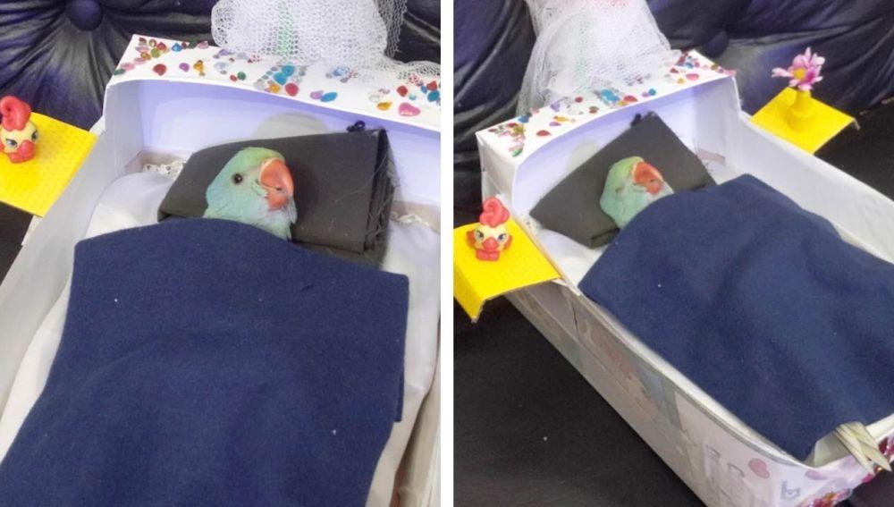 Loro durmiendo en su cama