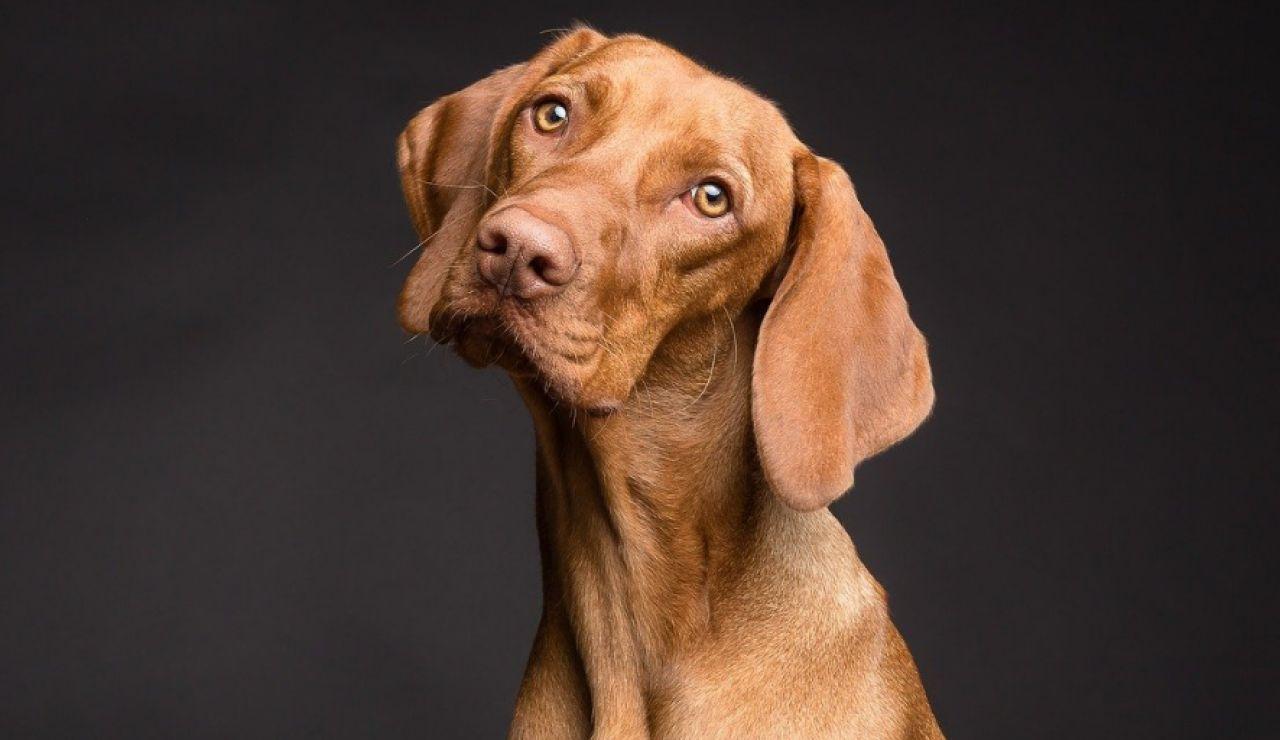 Un perro salva la vida de su dueño