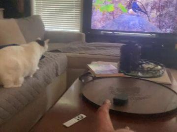 VÍDEO: Un gato salta a la televisión para cazar a un pájaro