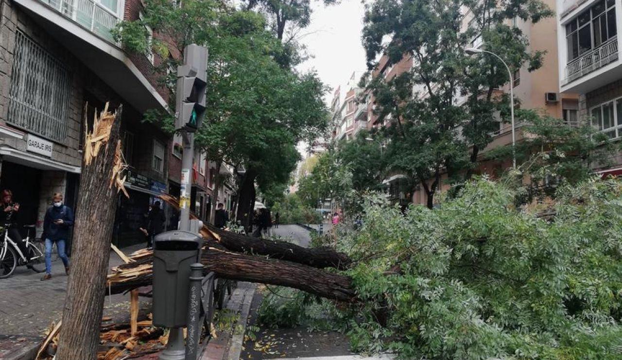 Varios árboles derribados por las fuertes rachas de aire