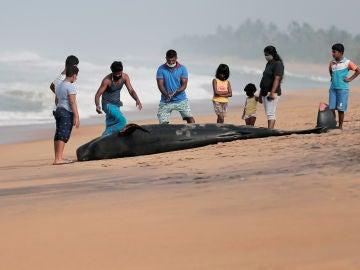 Decenas de ballenas aparecen varadas en la costa de Sri Lanka